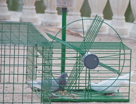 Jaulas captura palomas gp - Como atrapar ratas ...