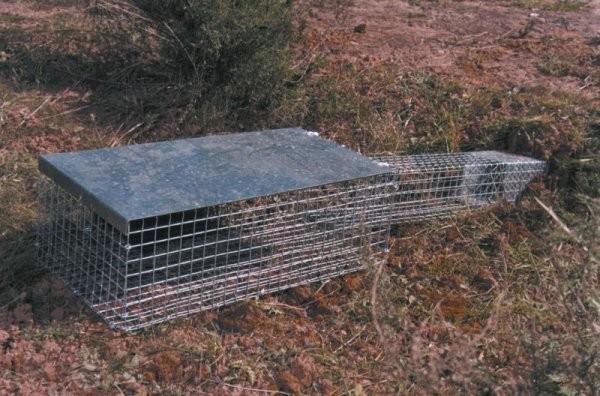 Todas las jaulas gp - Trampas para ratones vivos ...