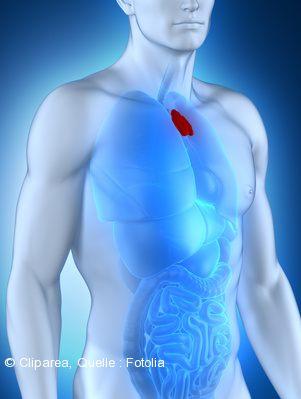 Die Thymusdrüse - brauchen wir die überhaupt? - reiki-auf-bestellung