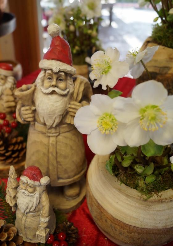 Nikolaus und Christrosen im Holztopf