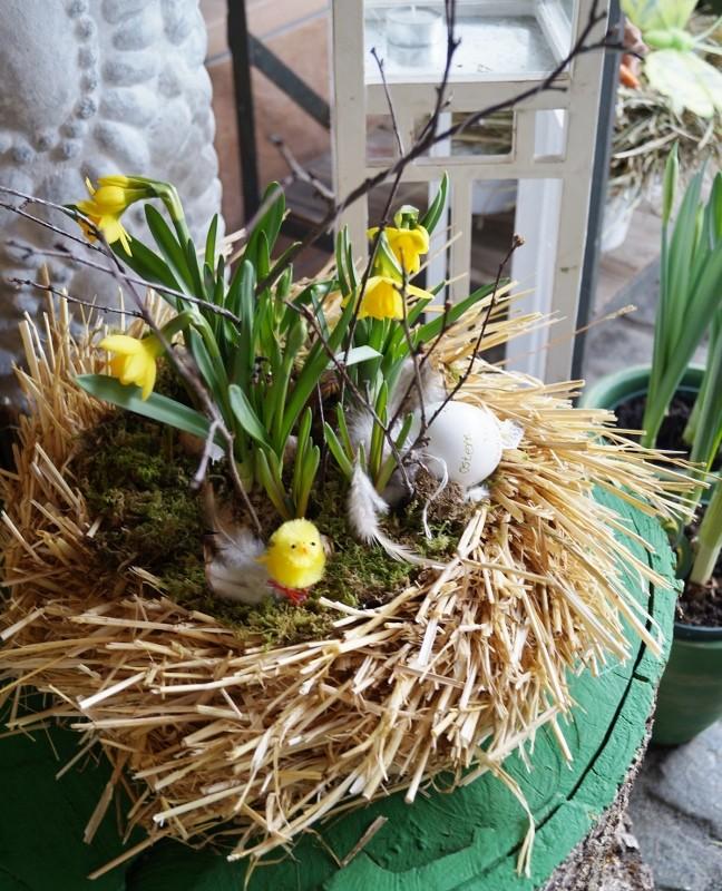 Osternest gepflanzt