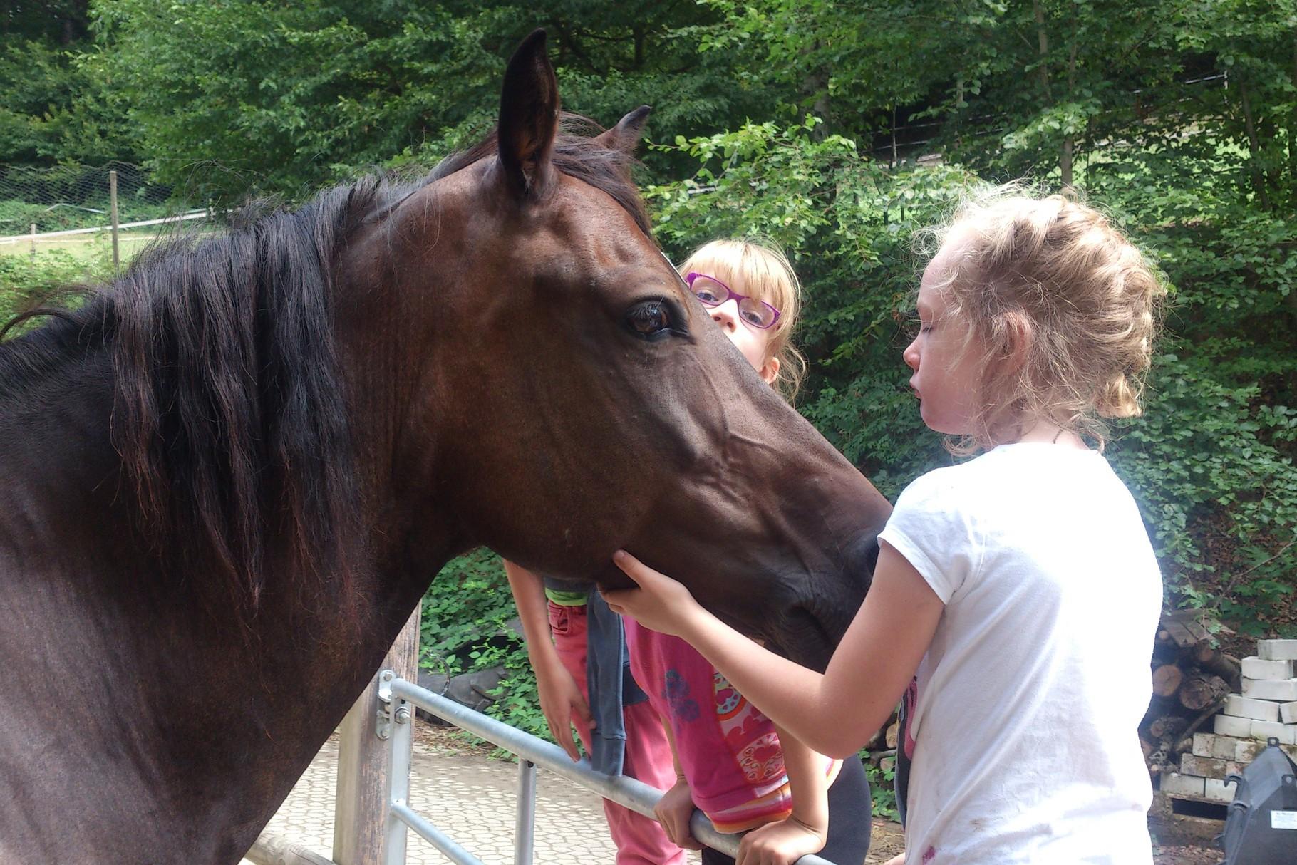 Nach einem langen Ausflug sucht Synnai im Stall immer noch die Nähe der Kinder
