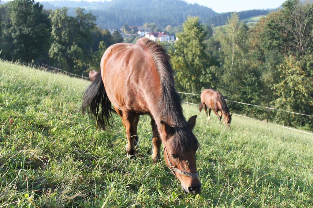 """Unsere """"jungen"""" Pferde"""