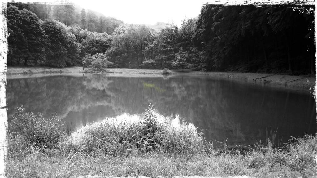 Teich im Pferdebachtal