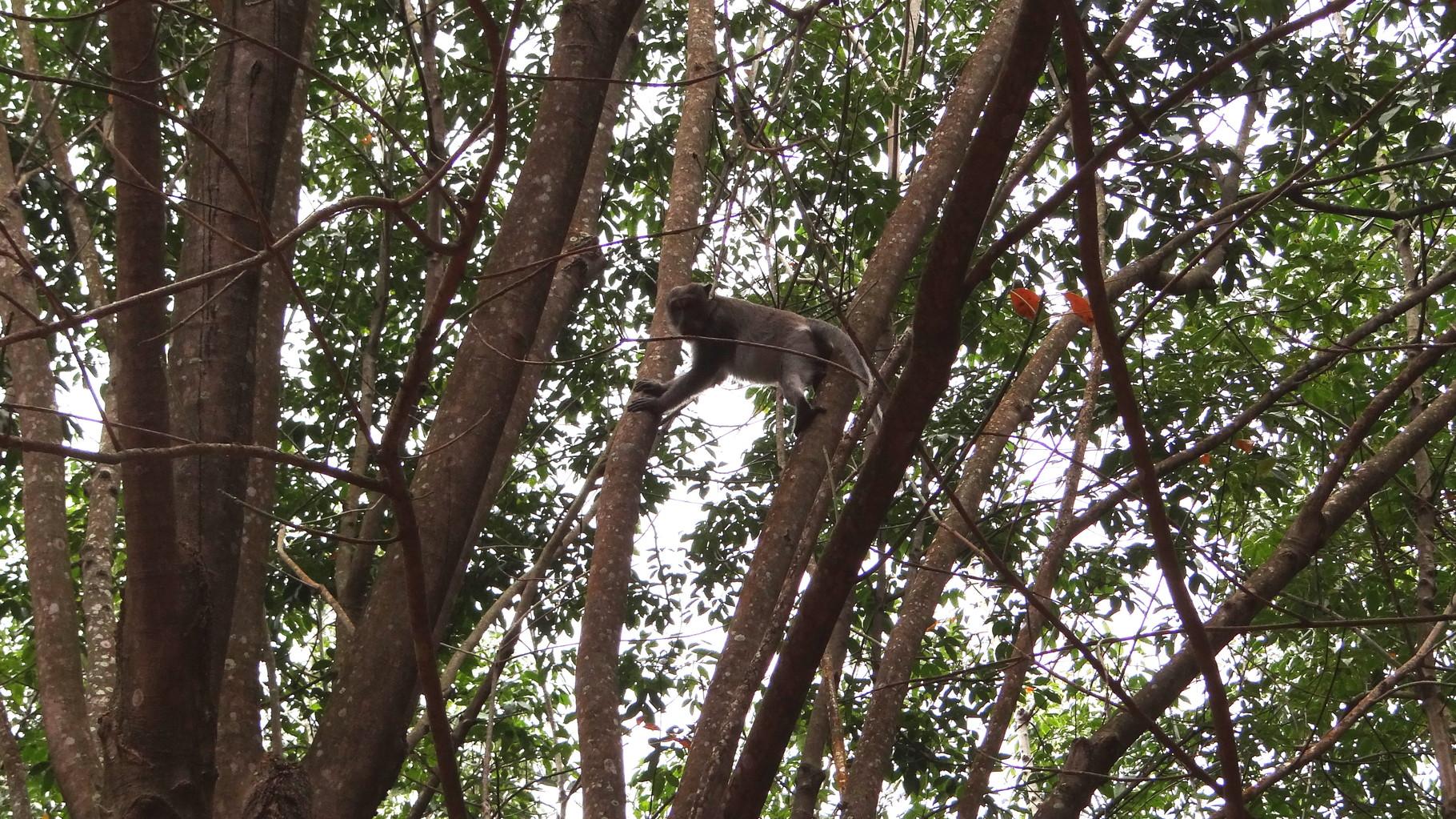 Auch Affen gibts auf der Insel