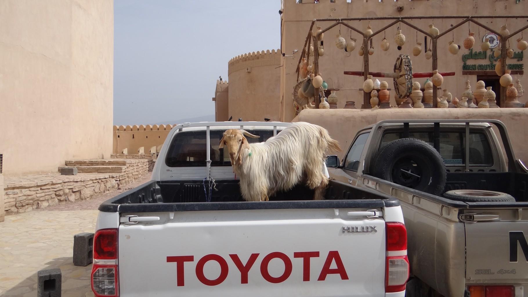 Ein Toyota ist für alles gut:-)