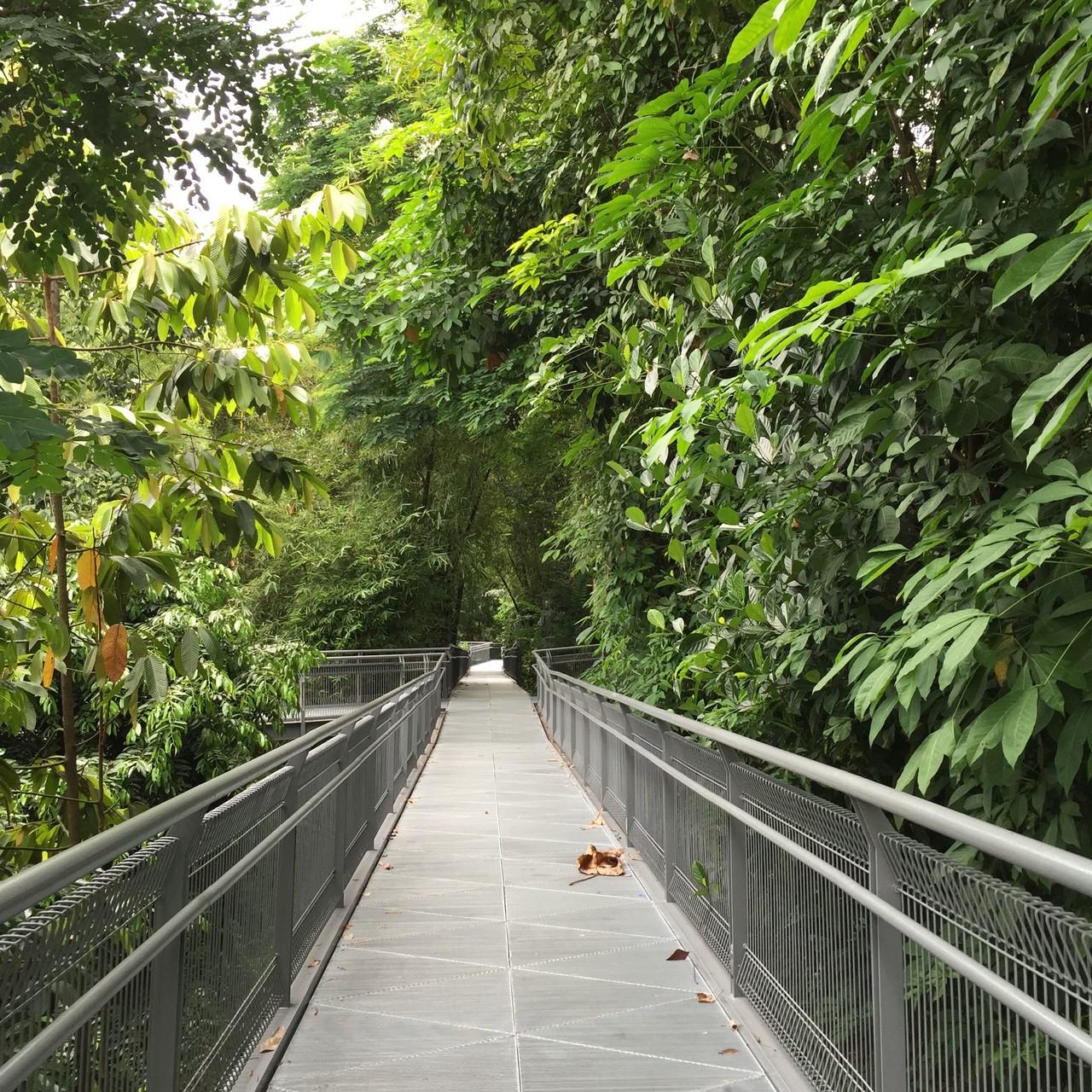 In den Southern Ridges in Singapur...