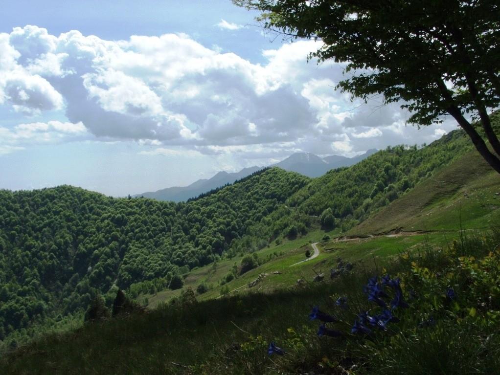 ALPE SACCHI - Agosto 2006