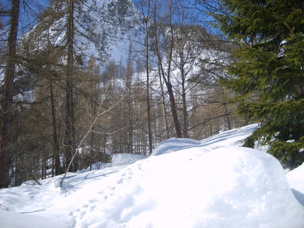 RIMA - 14.02.2009