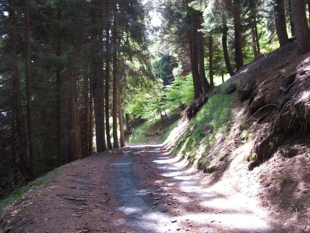 STRADA PER L'ALPE SACCHI - MT. 1261 - A POCHI KM. DA VARALLO - Agosto 2006