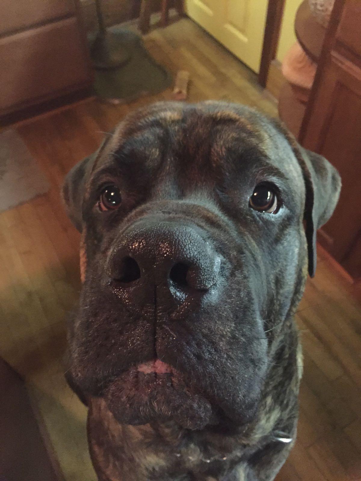 einer meiner süßen Hunde