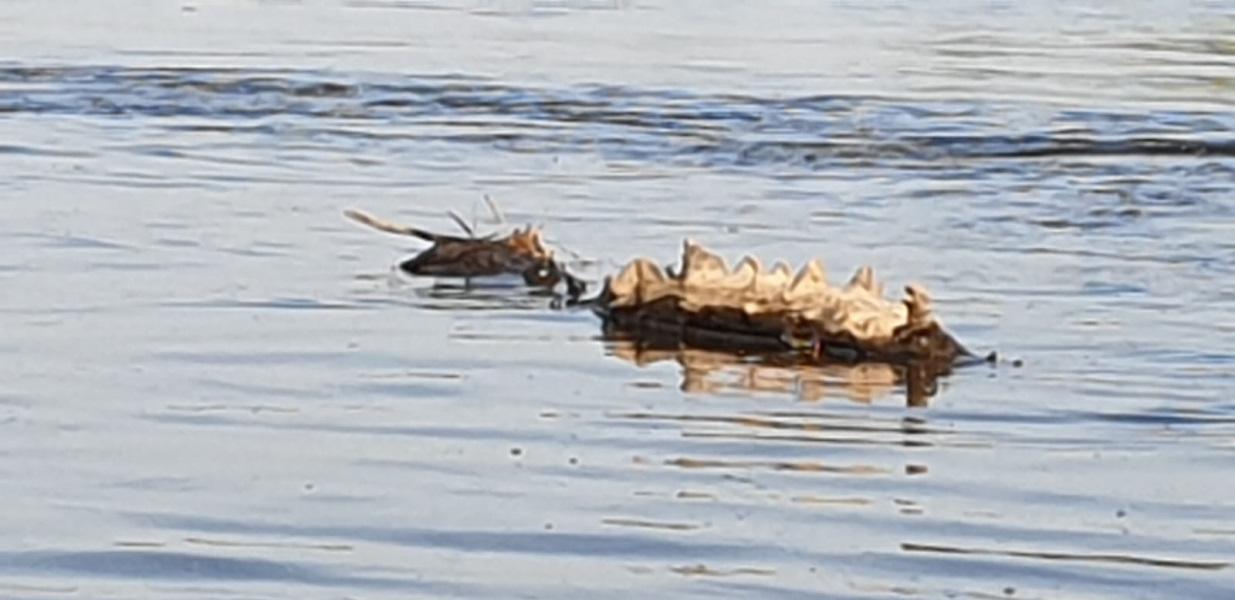 Ein Krokodilrücken