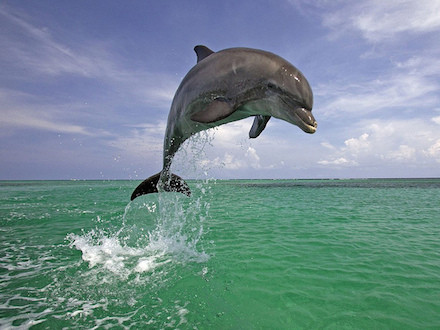 Jumping Dolphin by victoria white2010
