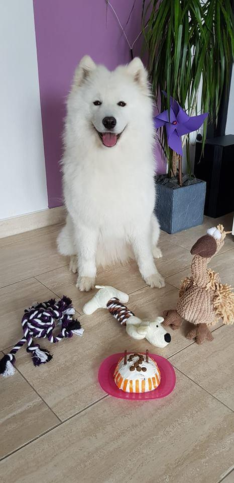 Sunny an ihrem 2. Geburtstag ( Bild copyright S. Kirschberger)