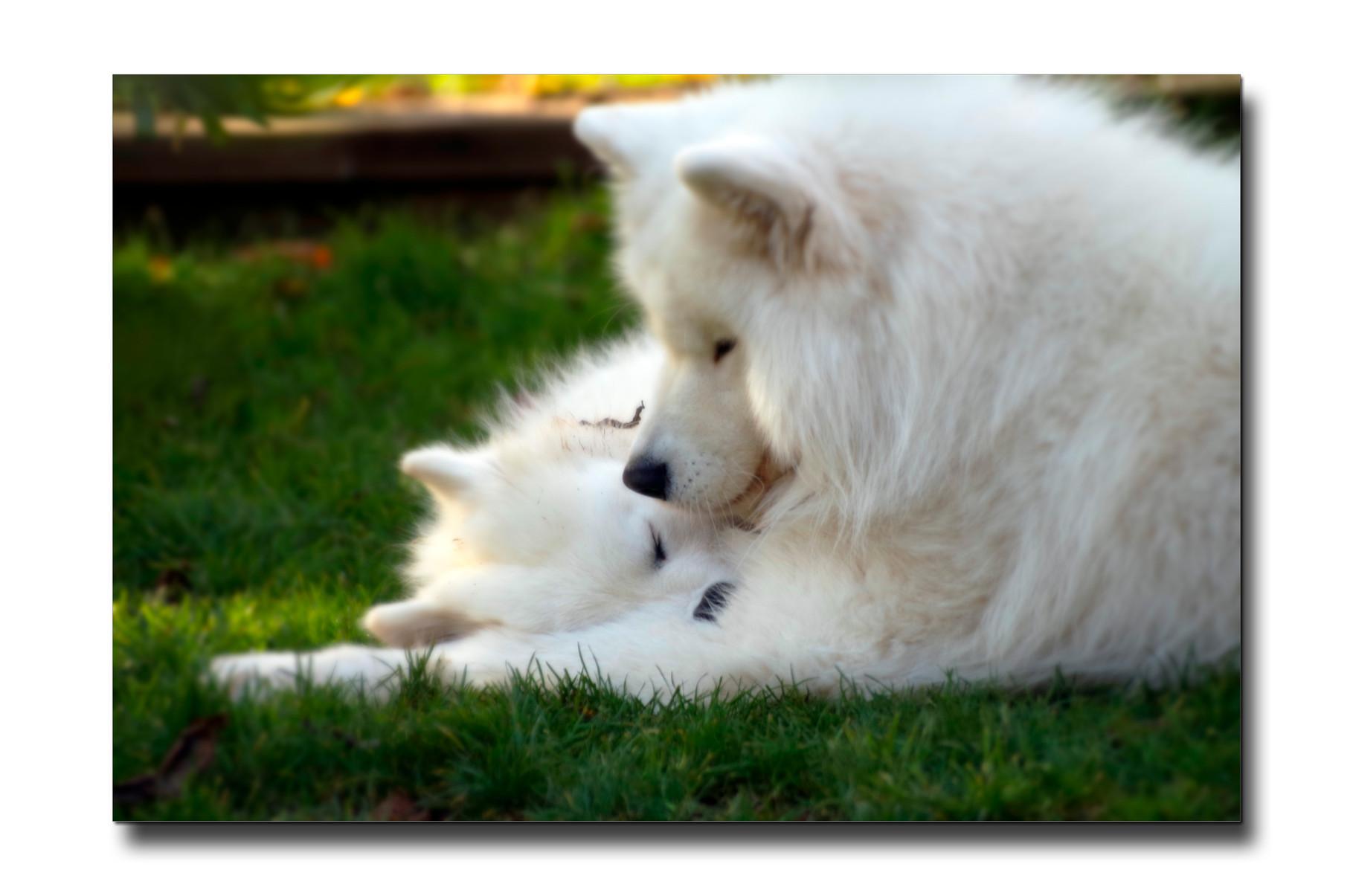 Leni und Morri beim Kuscheln