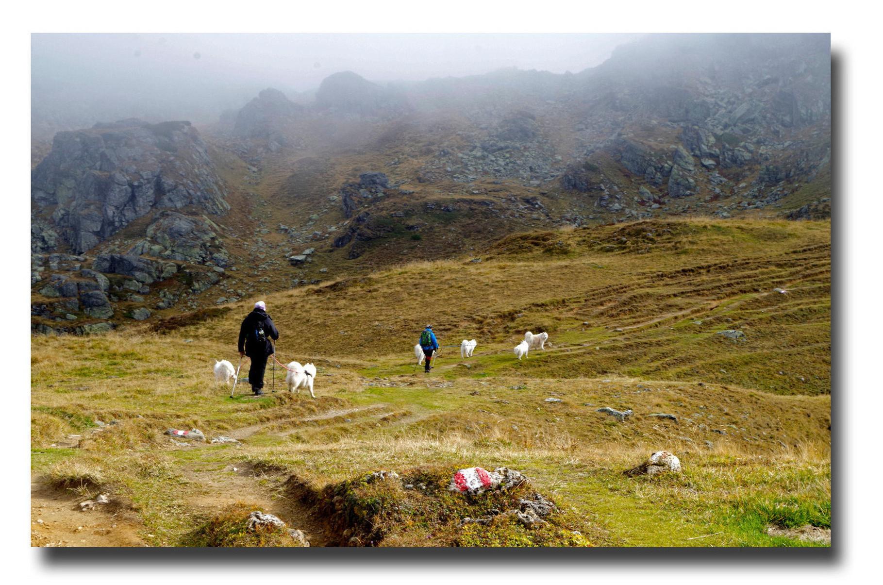 Mit Heidrun und ihren Samojeden unterwegs in den Obertauern