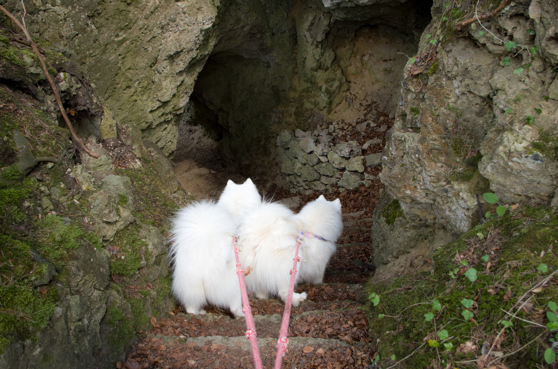 durch das Felslabyrinth auf Burg Rabeneck
