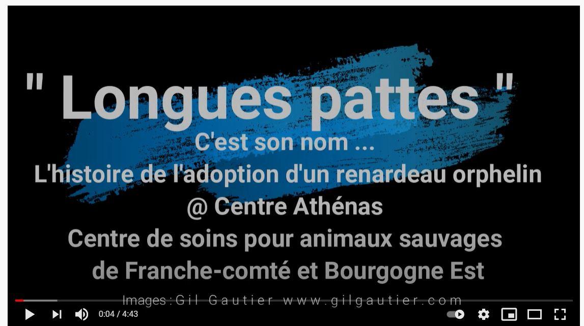 LONGUES PATTES (Renardeau orphelin)