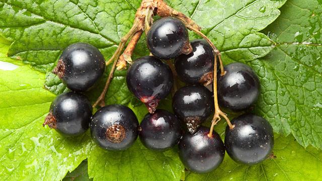 Zwarte Bessen - De bessentuin Brucht