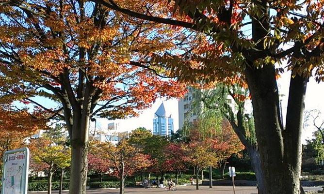 新潟地方法務局(帰化申請取扱)の目の前にある西大畑公園の紅葉
