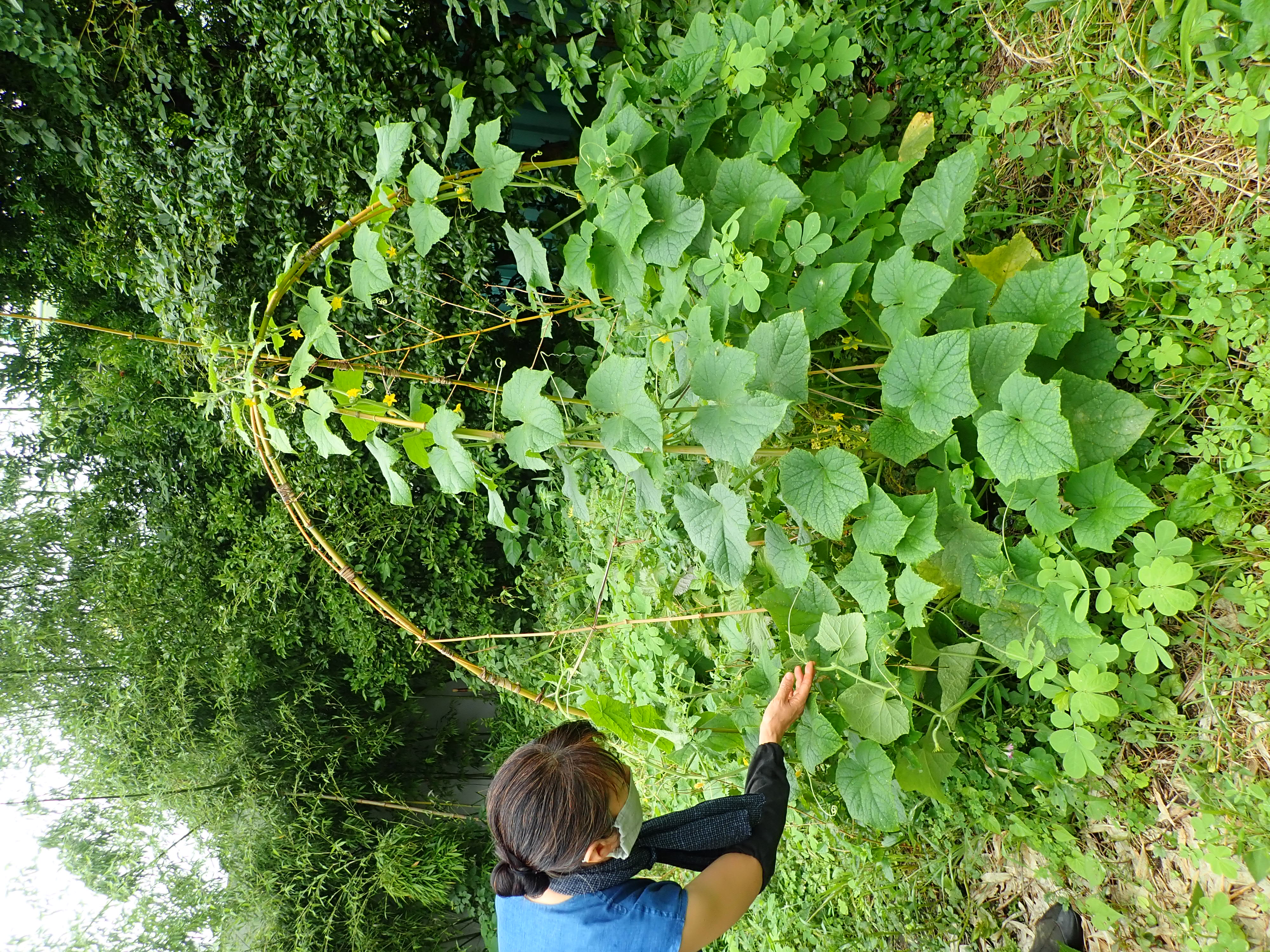 石田紀佳さんのまいたソバの種(写真は石田さんからお借りしました)