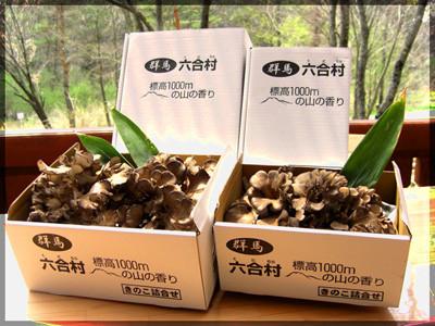舞茸の栽培、販売もしております
