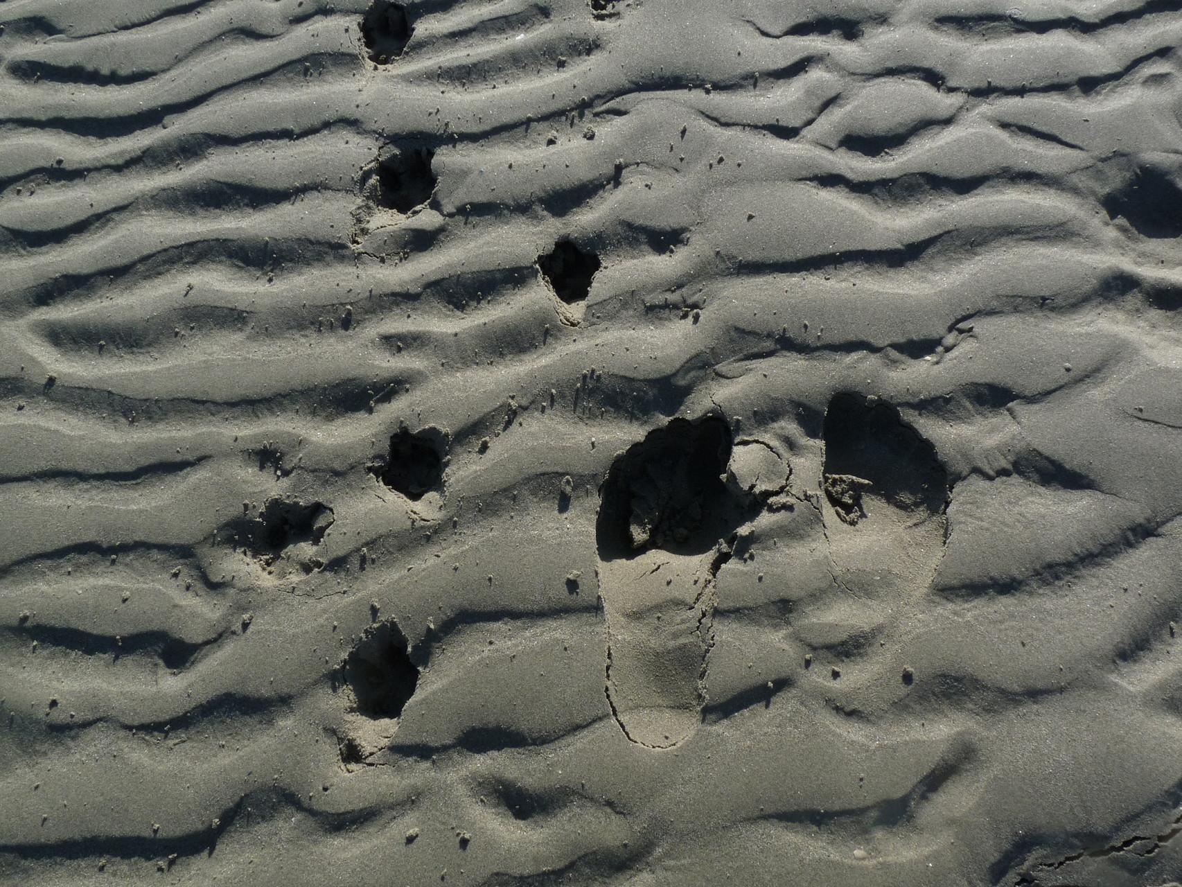 A pieds nus sur la plage de Cayeux sur Mer ©milou-en-baie