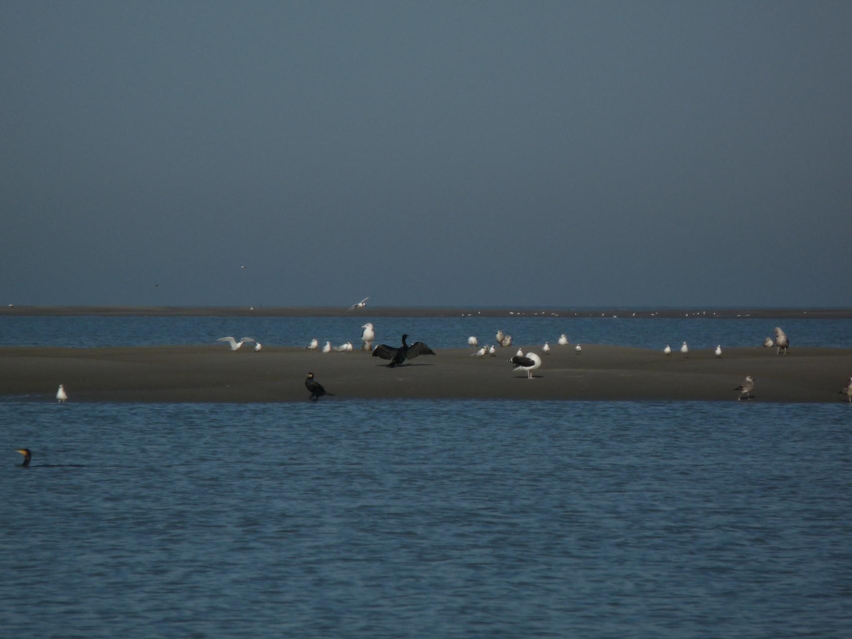 Oiseaux au bord de la plage de Cayeux sur Mer ©milou-en-baie