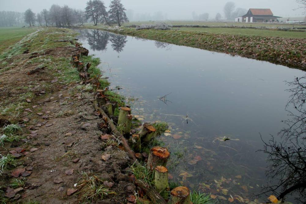 Viel mehr Einstau war mit dem alten Deich nicht möglich. Bis zum Stauziel fehlten aber immer noch über 30 cm. Die eingerammten Bäume wurden alle am Mühlen Graben gefällt. Aufgenommen am 15.11.11