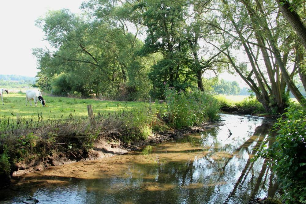 Die dabei verbleibende Wassertiefe im Mühlengraben ist auch für größere Fische noch ausreichend.