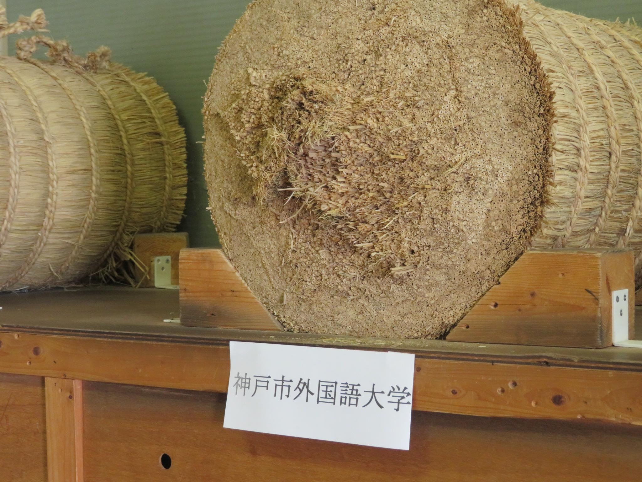 神戸市外国語大学は本多流の同門であり、ともに寺内先生に教えて頂いた歴史があります
