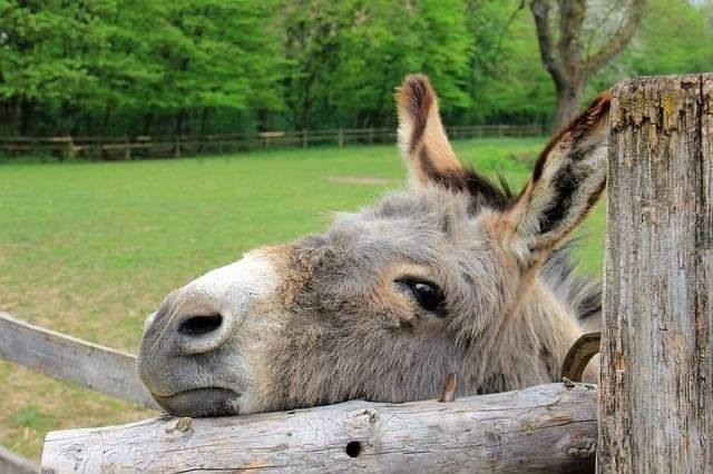 Der Esel und seine tragende Rolle bei FRAU TRIFFT KIRCHE