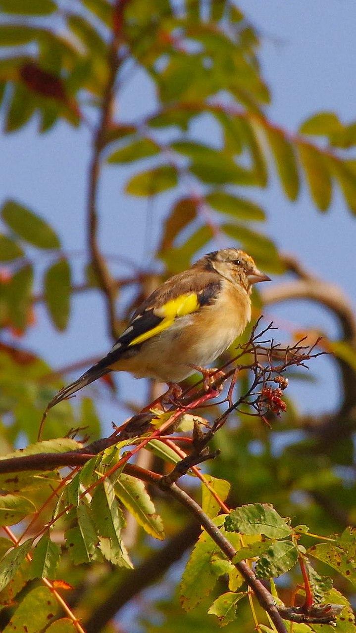"""Bunter """"Herbstvogel"""""""