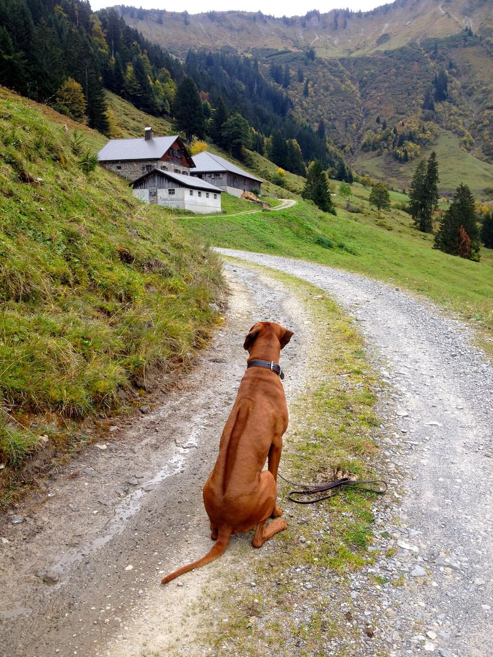 3 stündige Alpen-Wanderung mit Frauchen und T-Rex vom Laternser Bädle aus