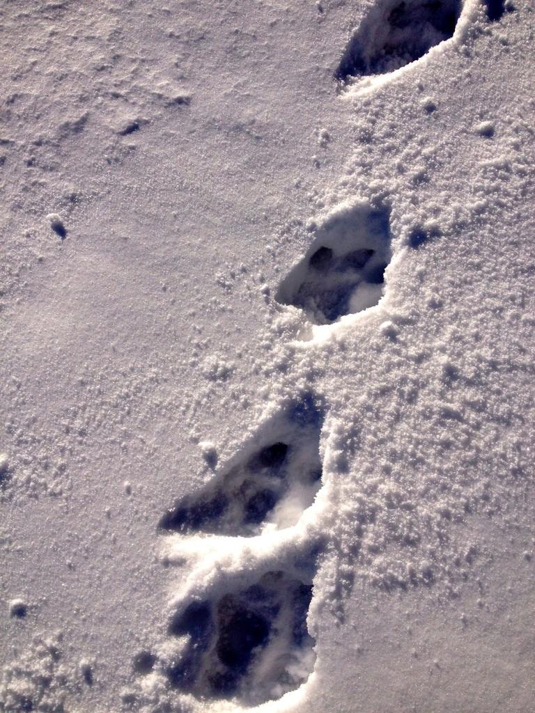 afrikanische Spuren im Schnee