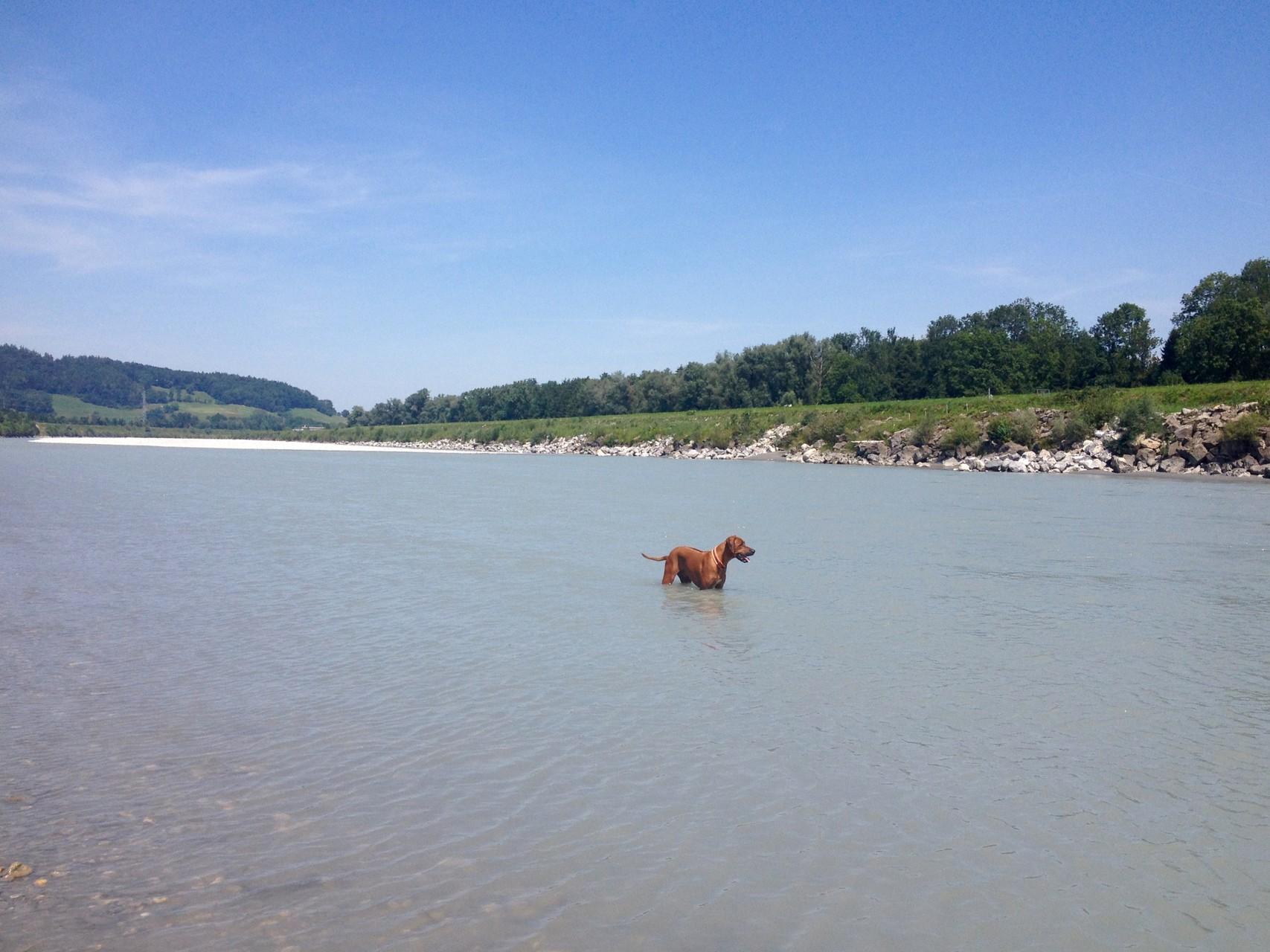 Unsere Karibik; Sandbank im Rhein bei Rüthi, CH