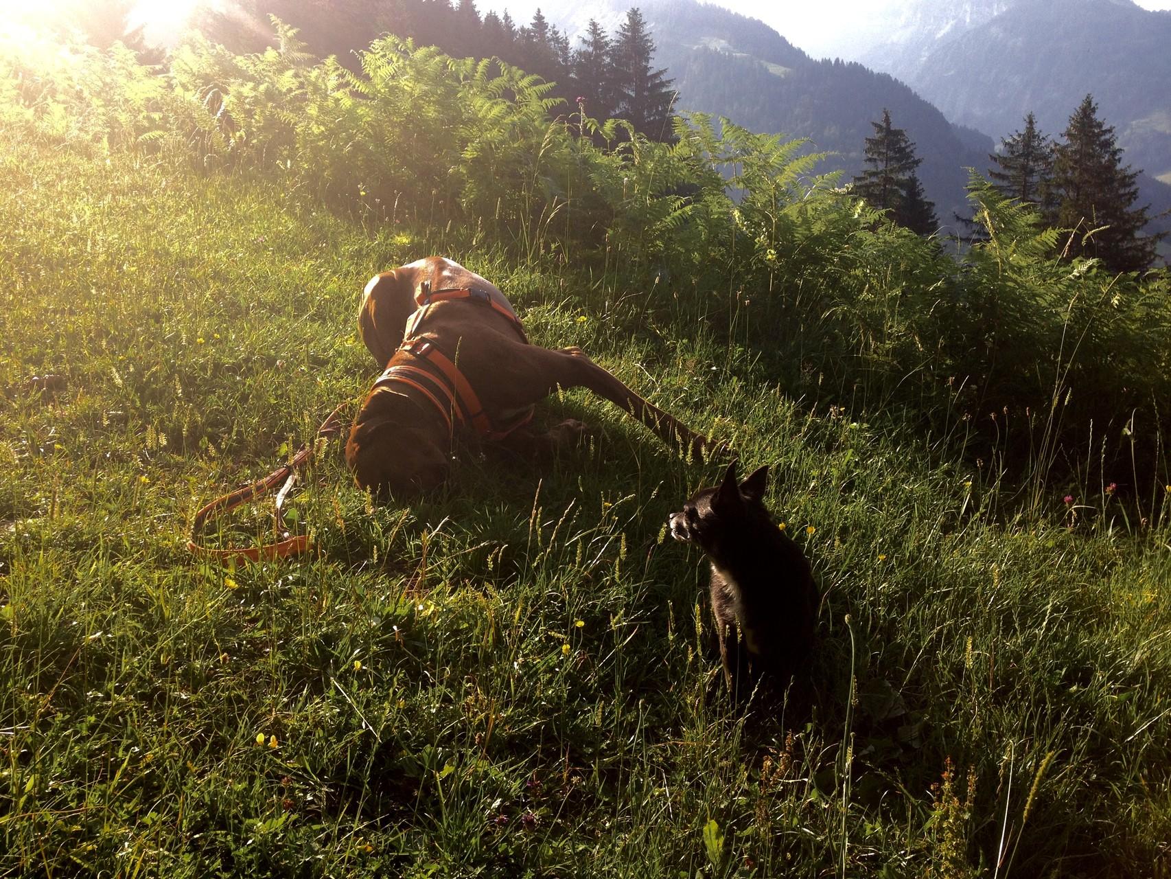 Kurze Rast beim Aufstieg nach Baumgarten/Bezau, Vorarlberg.