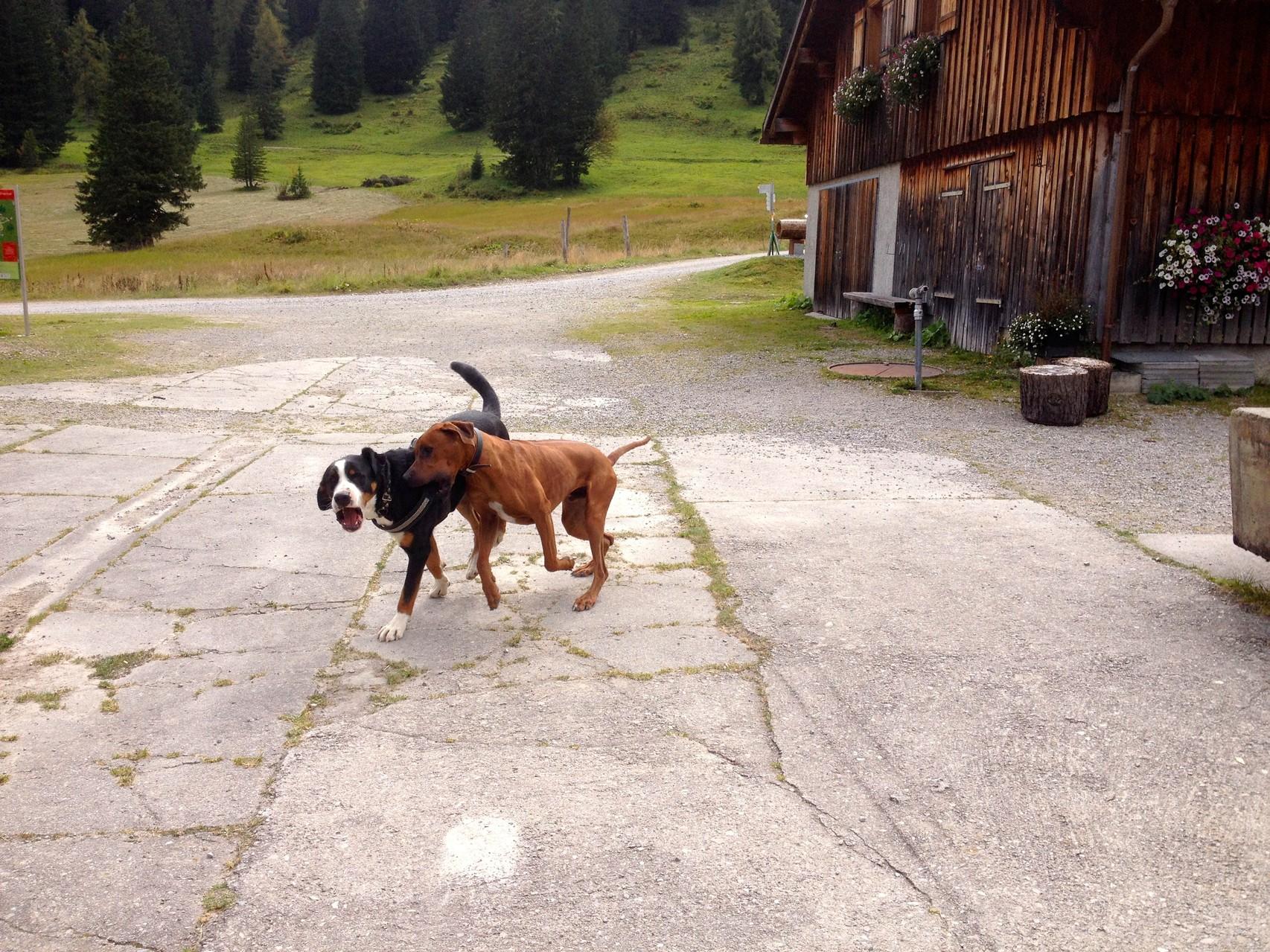 Spiel bei der Parfienz Alpe im Brandnertal