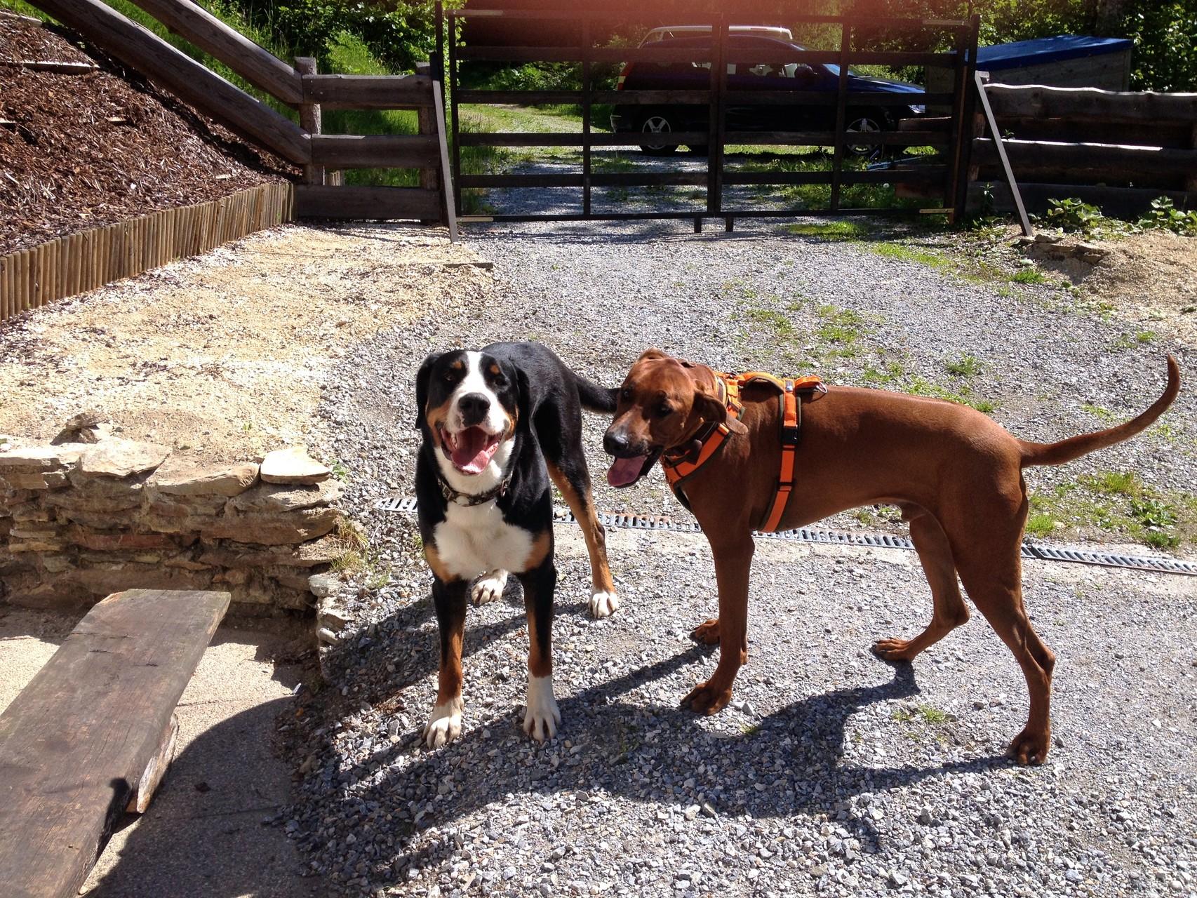 Demani und sein Kumpel Hugo, ein Schweizer Sennenhund...