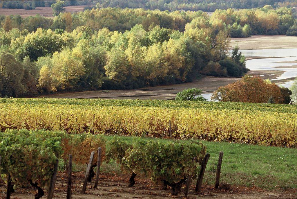 Vignobles de Pouilly