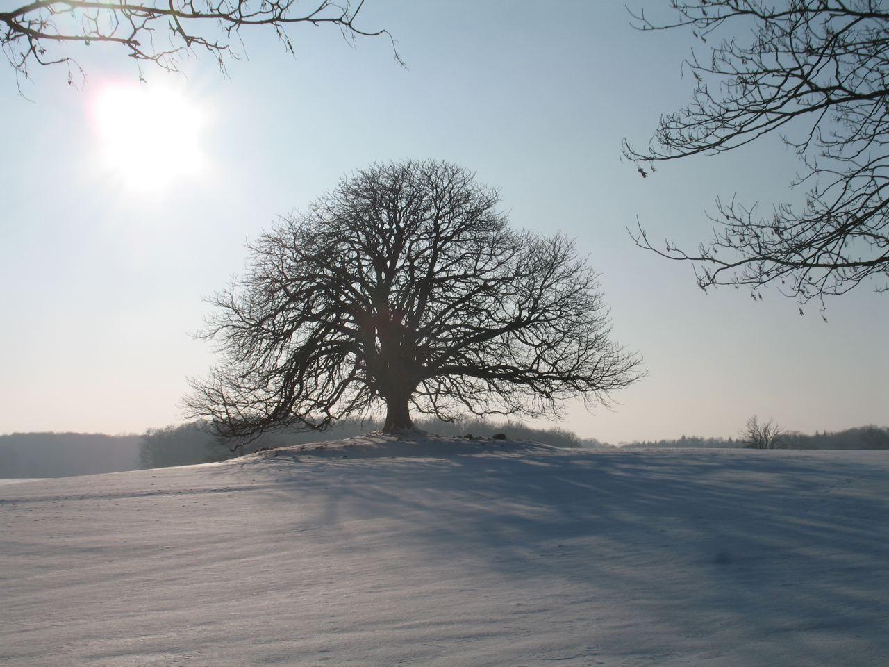 ... und entdecken Sie den Winter in der Holsteinischen Schweiz.