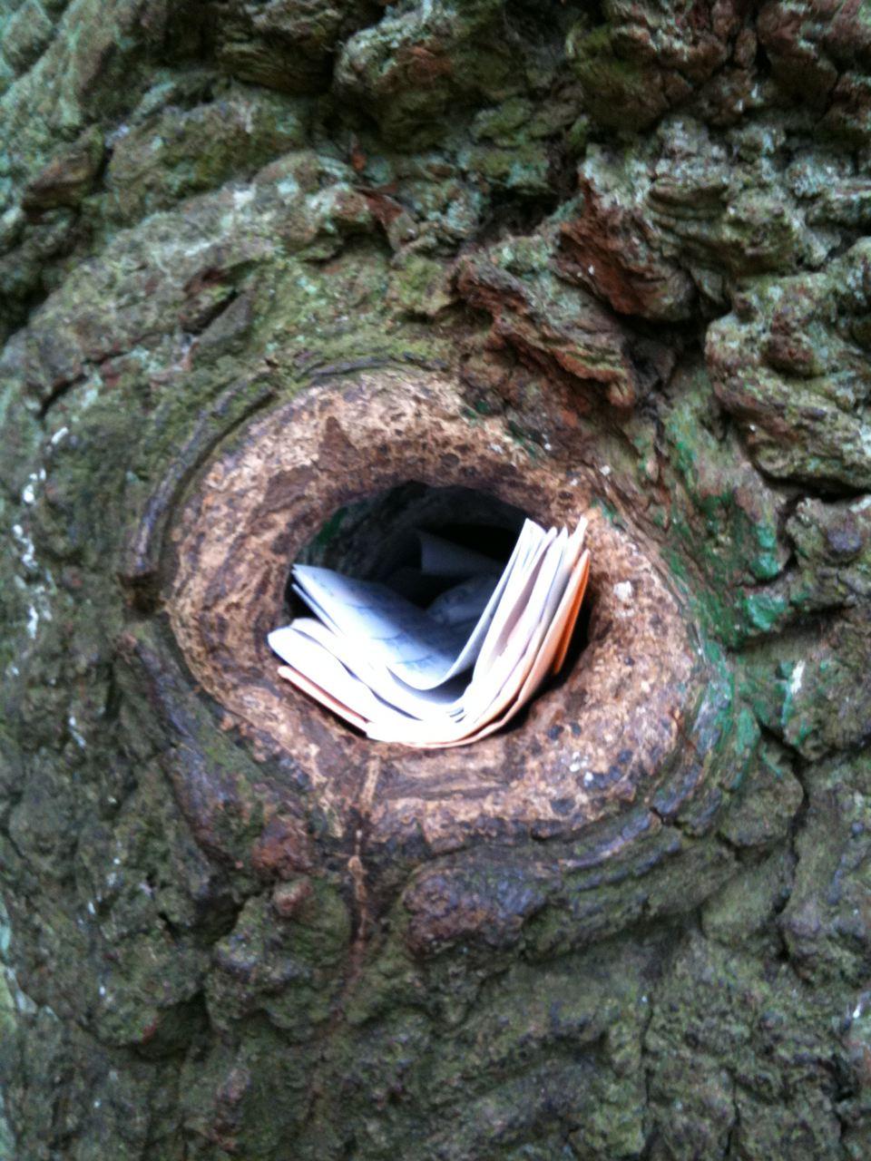 Denn dann, aber nicht nur dann, können Sie Liebesbriefe in die Bräutigamseiche legen,