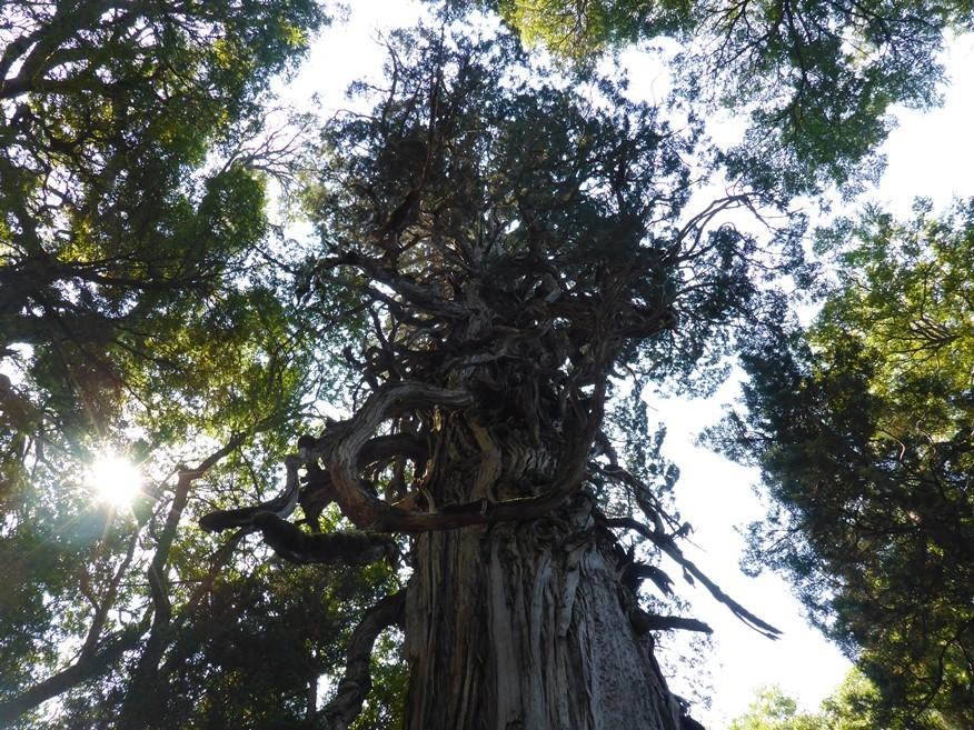 Wunderschöner und imposanter Baum