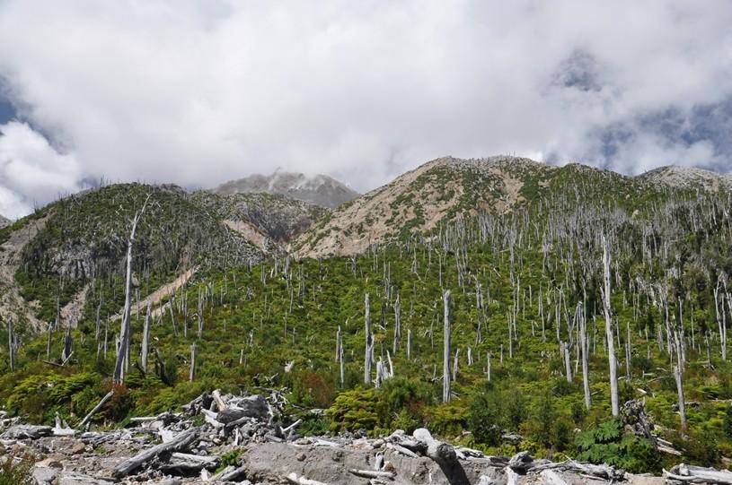 Zerstörter Wald, doch schon von Nalcas bewachsen