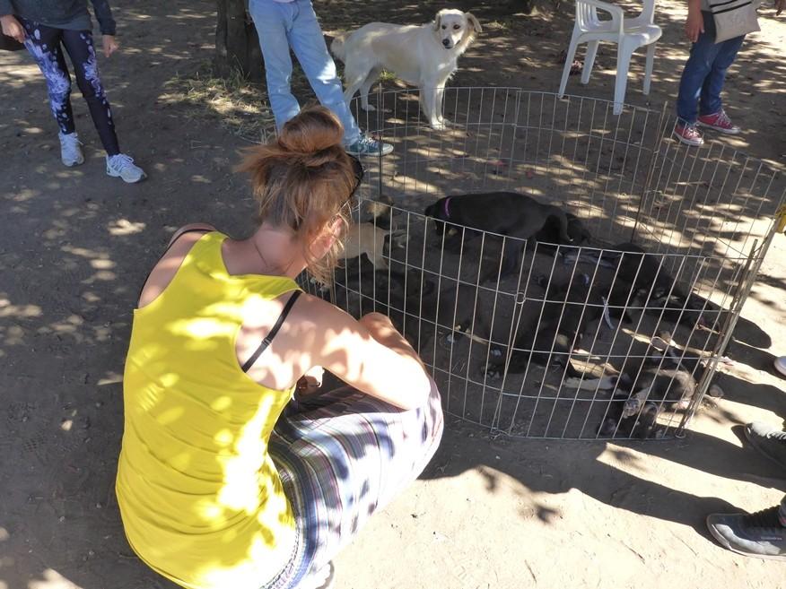 Kleine Hunde zum Verkauf auf dem Markt