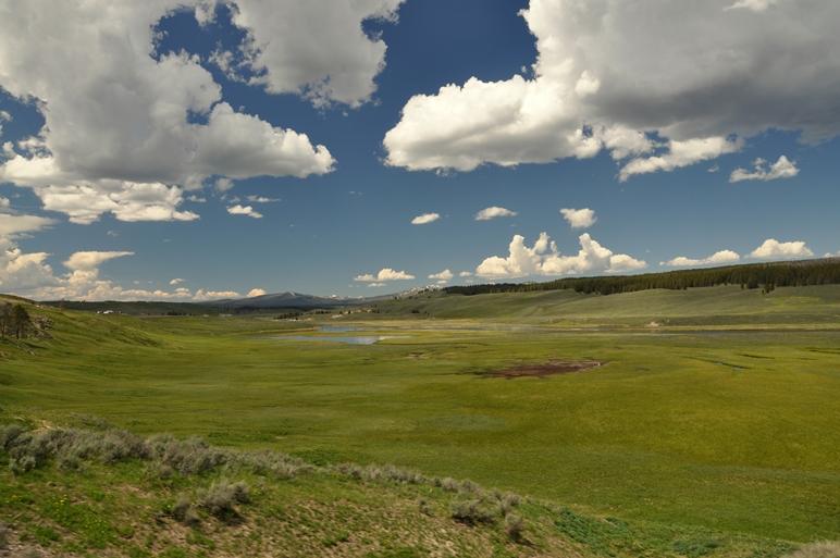 Schöne, grüne Landschaften finden wir überall im Yellowstone
