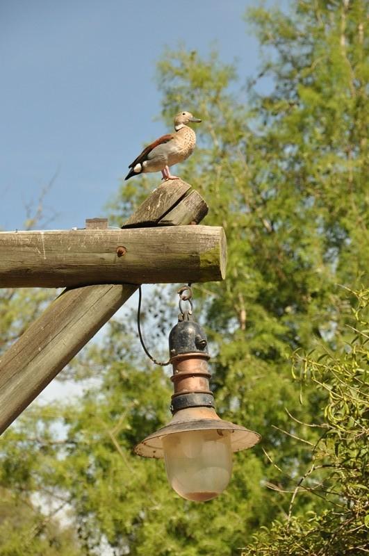 Vogel auf Laterne