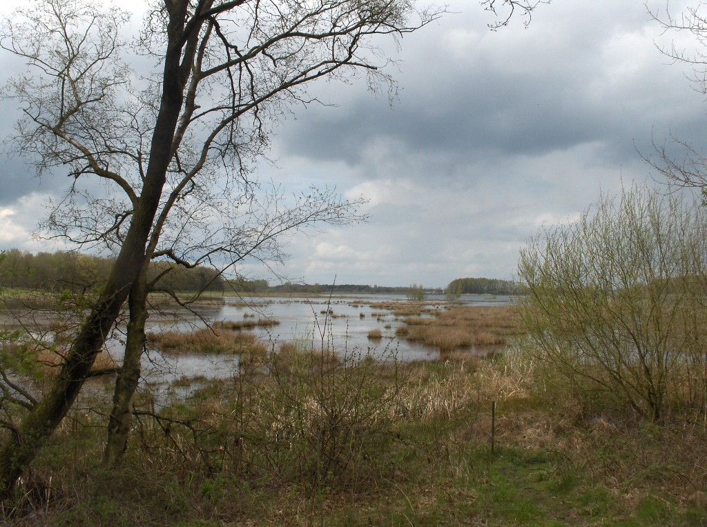 De Hamert Niederländischer Nationalpark