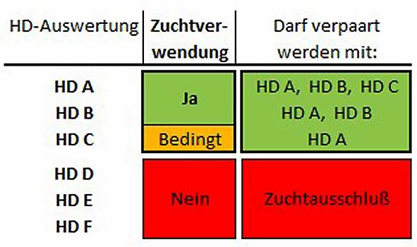 Hüftdysplasie (HD)