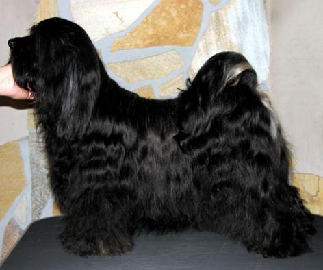Peter Künzel_Oelde_Tibet Terrier_KTR